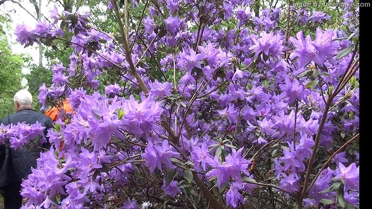 video 2018-04-28 Wageningen - arboretum Belmonte