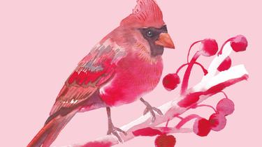 Painting a Cardinal