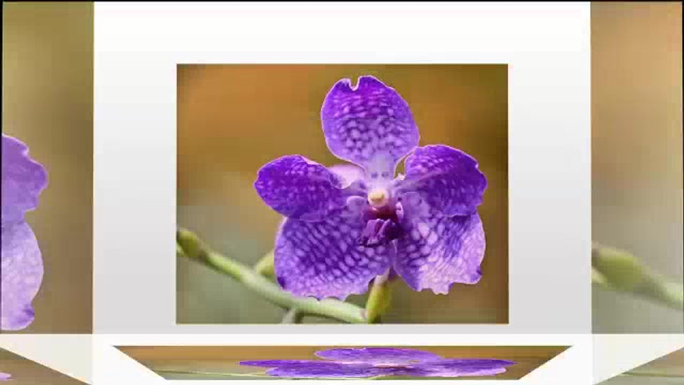 Orchids at Elegant Orchids