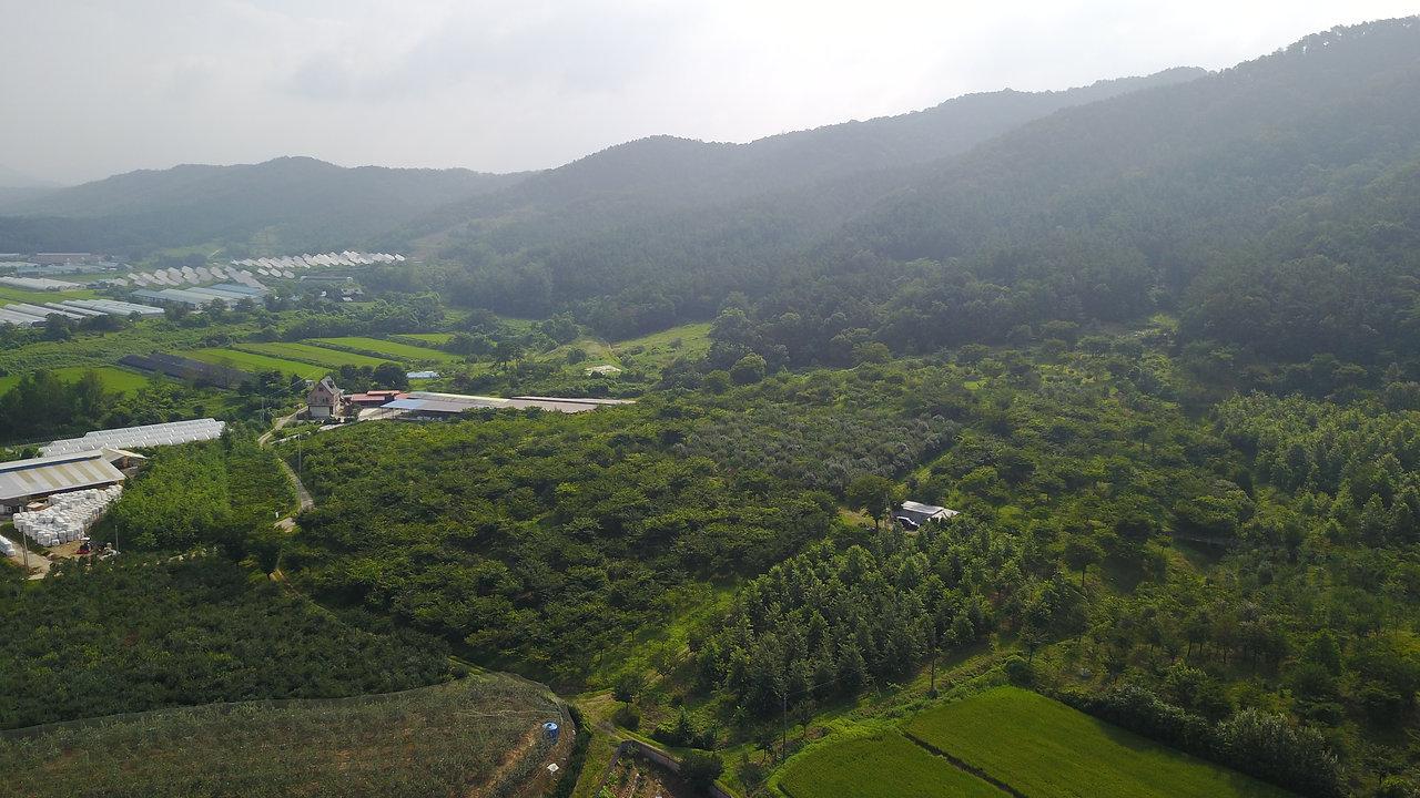 진천 농장 - Jin Cheon Plantation