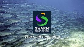 SWARM Organisation - The Origins