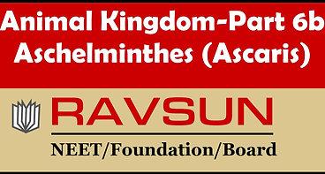 Animal Kingdom-Part 6b(Ascaris)