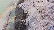 犬山城~sakura~イメージ動画制作《ドローン空撮》