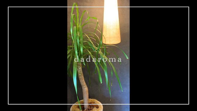 dadaroma-01