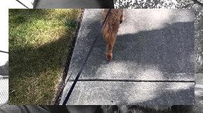 Take a walk with Scarlette