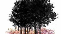 Lilas en el bosque