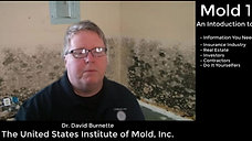 Mold 101 - Intro Video - An Introduction to Mold
