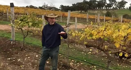 Vineyard Site selection