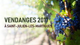 Vendanges 2017 à Saint-Julien-Les-Martigues