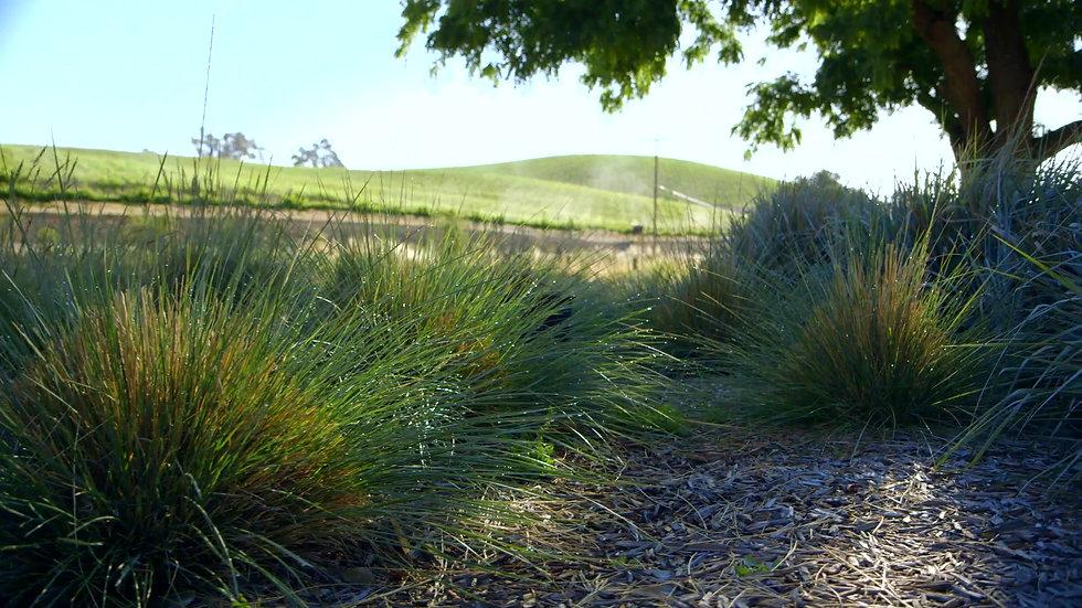 Shale Oak on a Sunny Afternoon