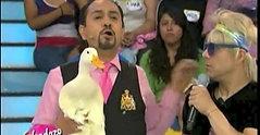 ¿Dónde está el Pato?