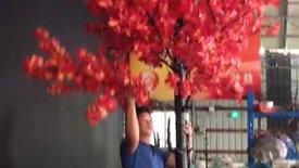 MAPPLE TREE