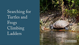 Searching_for_turtles_and_frogs_climbing_ladders