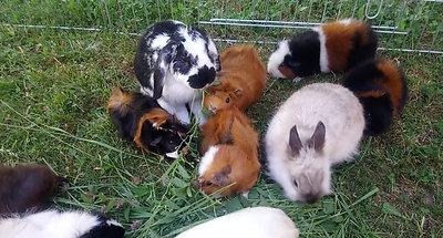 Les petits Amidoux dans l'herbe