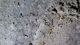 地面裂縫入侵白蟻