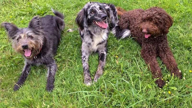 Hundeschule und Mehr
