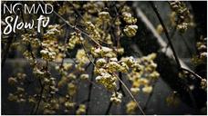 Nacre Spring Snow