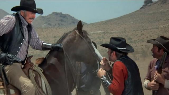 Blazing Saddles: Luke D'Agnese