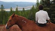 Riding a mustang at liberty in Montana (USA)