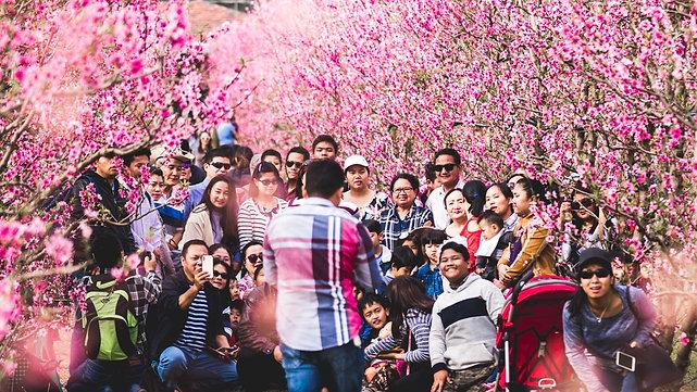 Saku Blossom Festival