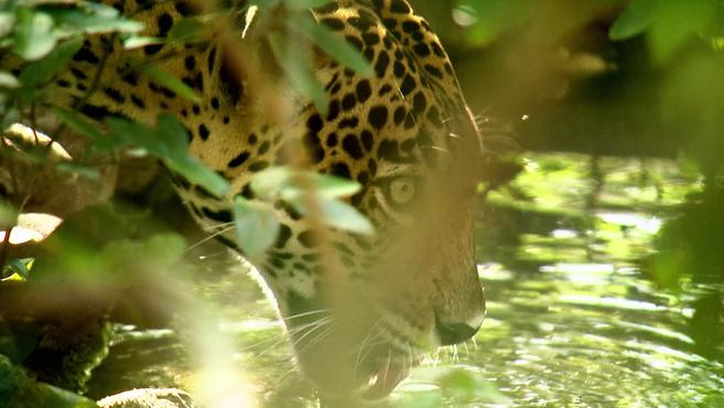 WildSide Costa Rica
