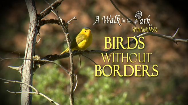 Birds Without Borders