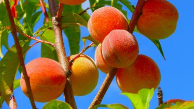 Sweet As A Peach Crumble