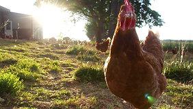 Handsome Brook Farms Documentary