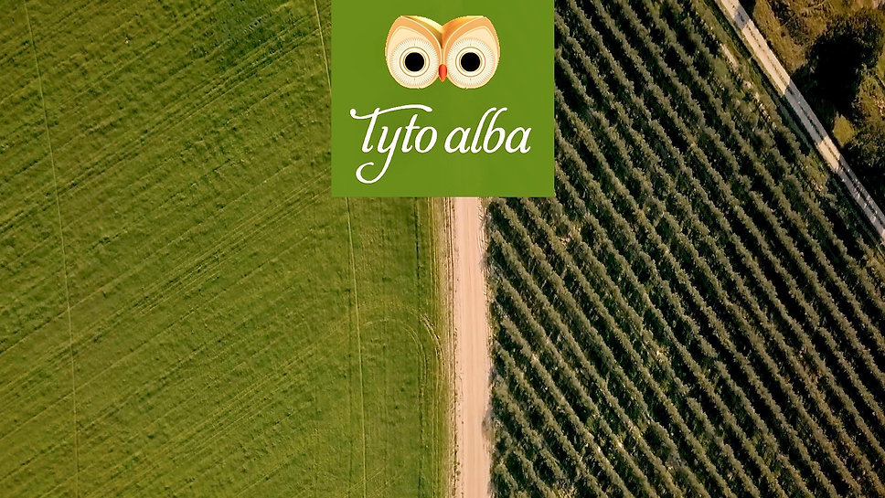 Tyto Alba Promo | Companhia das Lezírias