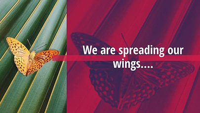 Spreading our wings