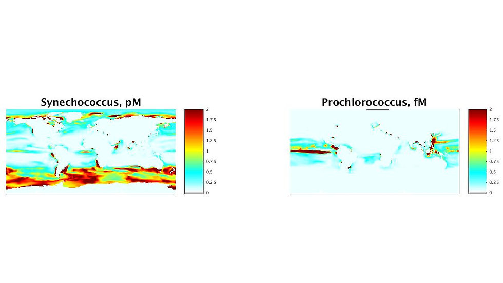 MeHg concentrations in different phytoplankton