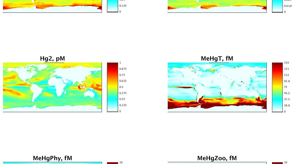 Daily Mercury Concentrations at top 10m of global ocean by MITgcm-Hg Model