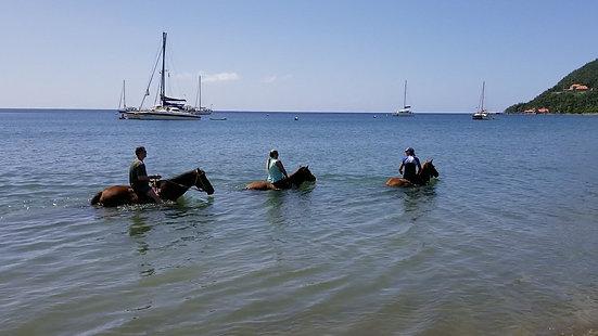 Wanderlust Caribbean - Horseback Riding