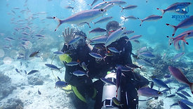 201801cebu_experience diving