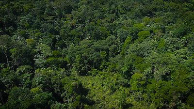 Bosque en Sarapiquí