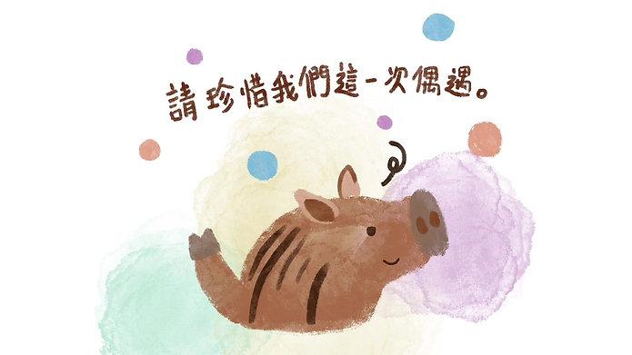 野豬在城市的一天