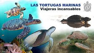 CAPÍTULO LAS TORTUGAS MARINAS
