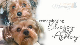 Remembering Bluesey & Ashley
