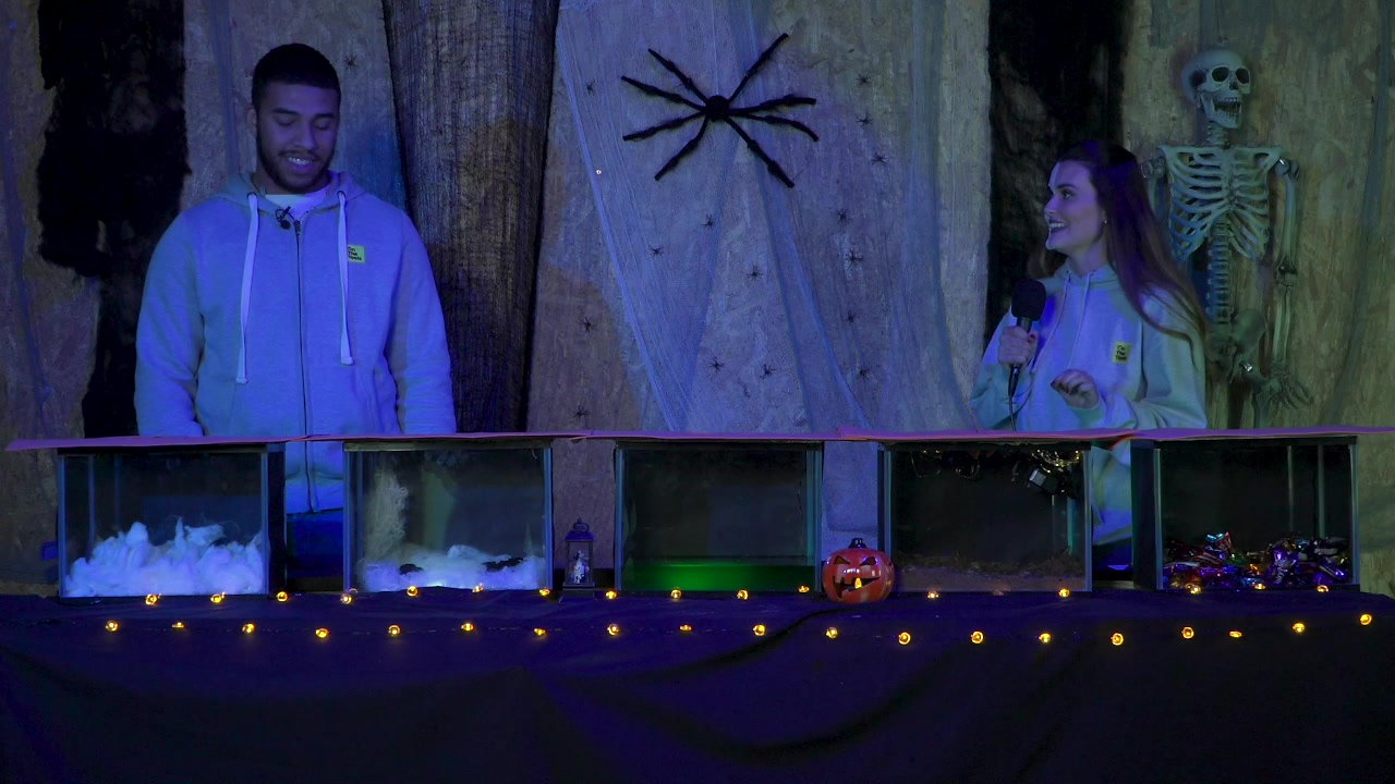 Tool Station Halloween Special Game Show