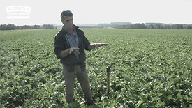 Cotswold Seeds First Hand Cover Crops with Julian Gold