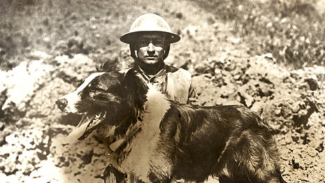 Honoring the Dogs of War