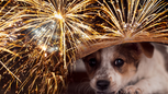Fourth of July - how to soothe anxious pets