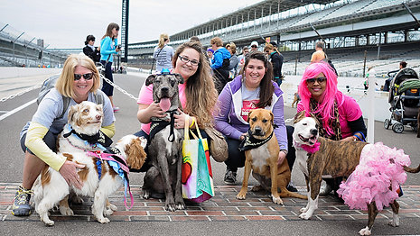 What's new with this year's Indy Mutt Strut