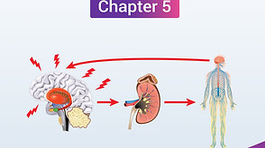 """Video 5 What is the Relationship Between Stress & """"Adrenal Fatigue?"""