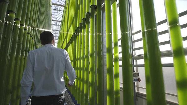 Algen Produktion