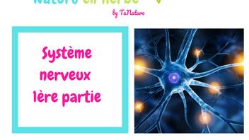 Le système nerveux (1ère partie)