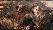 Africa 3D Movie Trailer