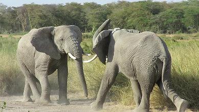 Ambosli National Park, Kenya