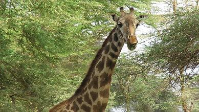 Ambosoli National Park, Kenya