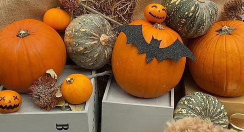 Halloween Themed Dog Pawty